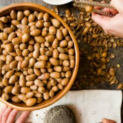 How to Make Acorn Flour – A Pre-Thanksgiving Family Project