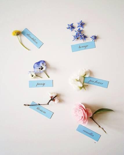 edible flowers-list A