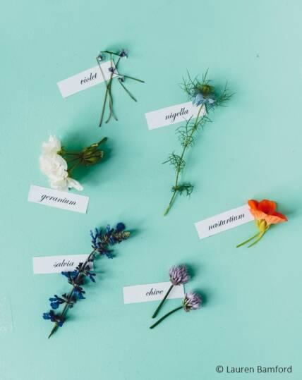 edible flowers-list B
